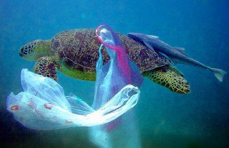 Ежегодно от пластиковых кульков только в Ньюфаундленде умирают более 100 тысяч китов, тюленей, черепах.