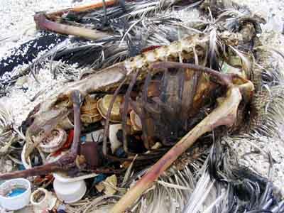 о вреде пластиковых пакетов